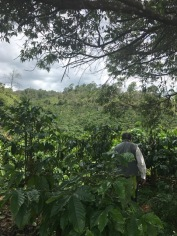 Coffee Plantation 4